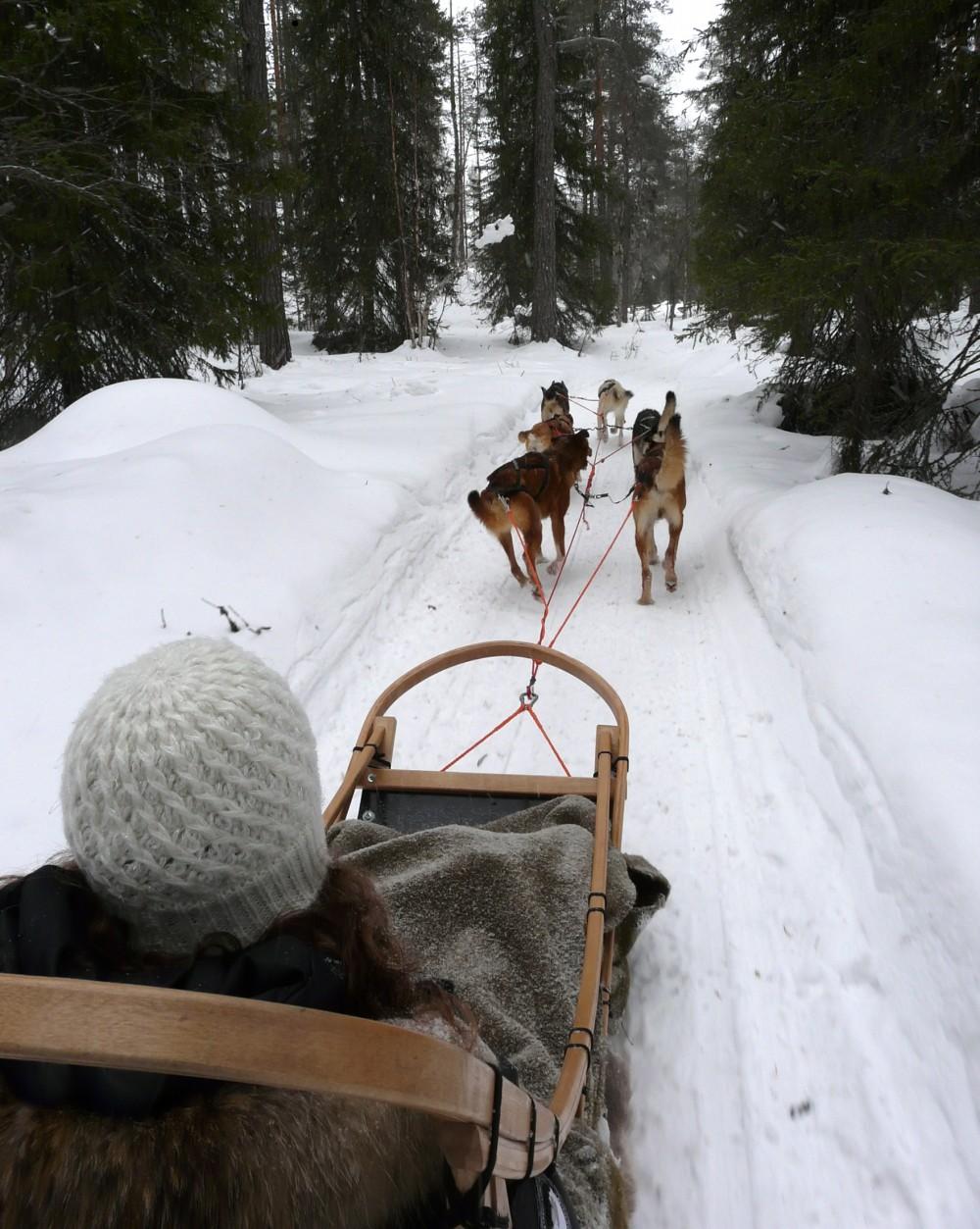Dog sled ride